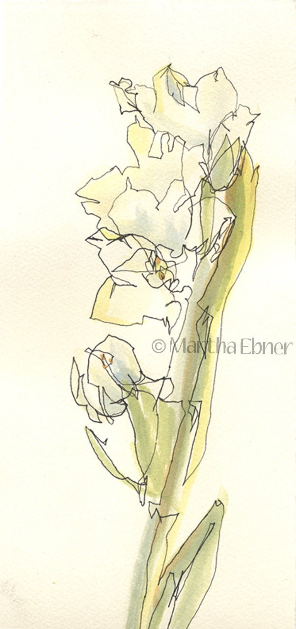 Line Drawing With Watercolor : Narcissus flower stalk watercolor line drawing by marthaebner
