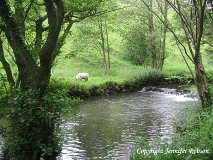 SHEEP BESIDE THE RIVER DOVE  5 x 6.5  Photo Greetings Card