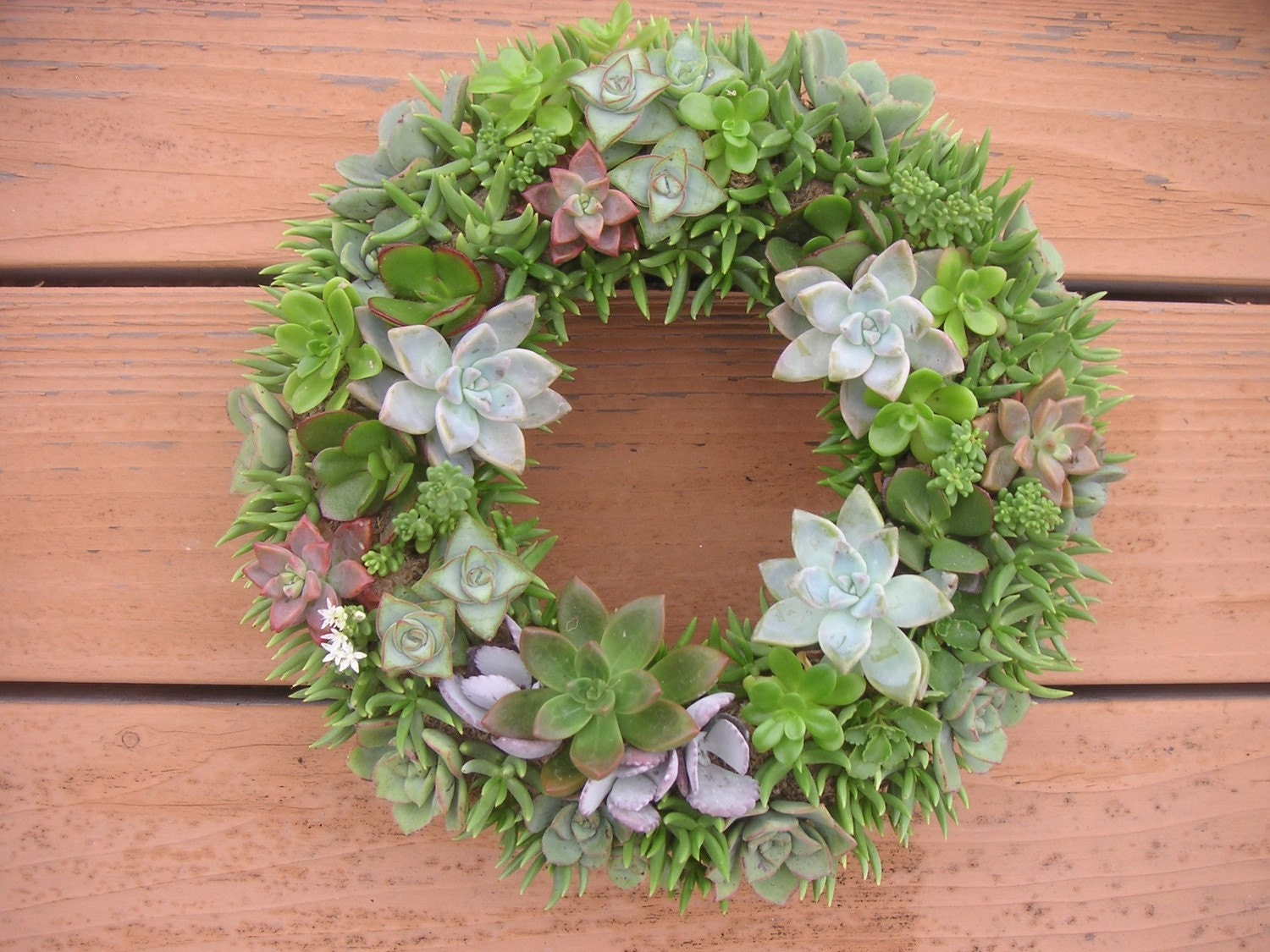 Reserved For Kristin, 2 16 Inch Beautiful Succulent Wreaths For Her Wedding, February 21 Ship Date