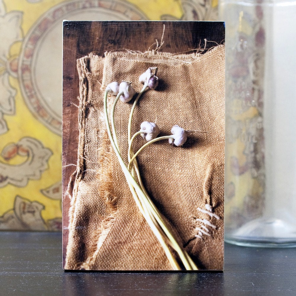 Dried Scapes, photo block by kerri