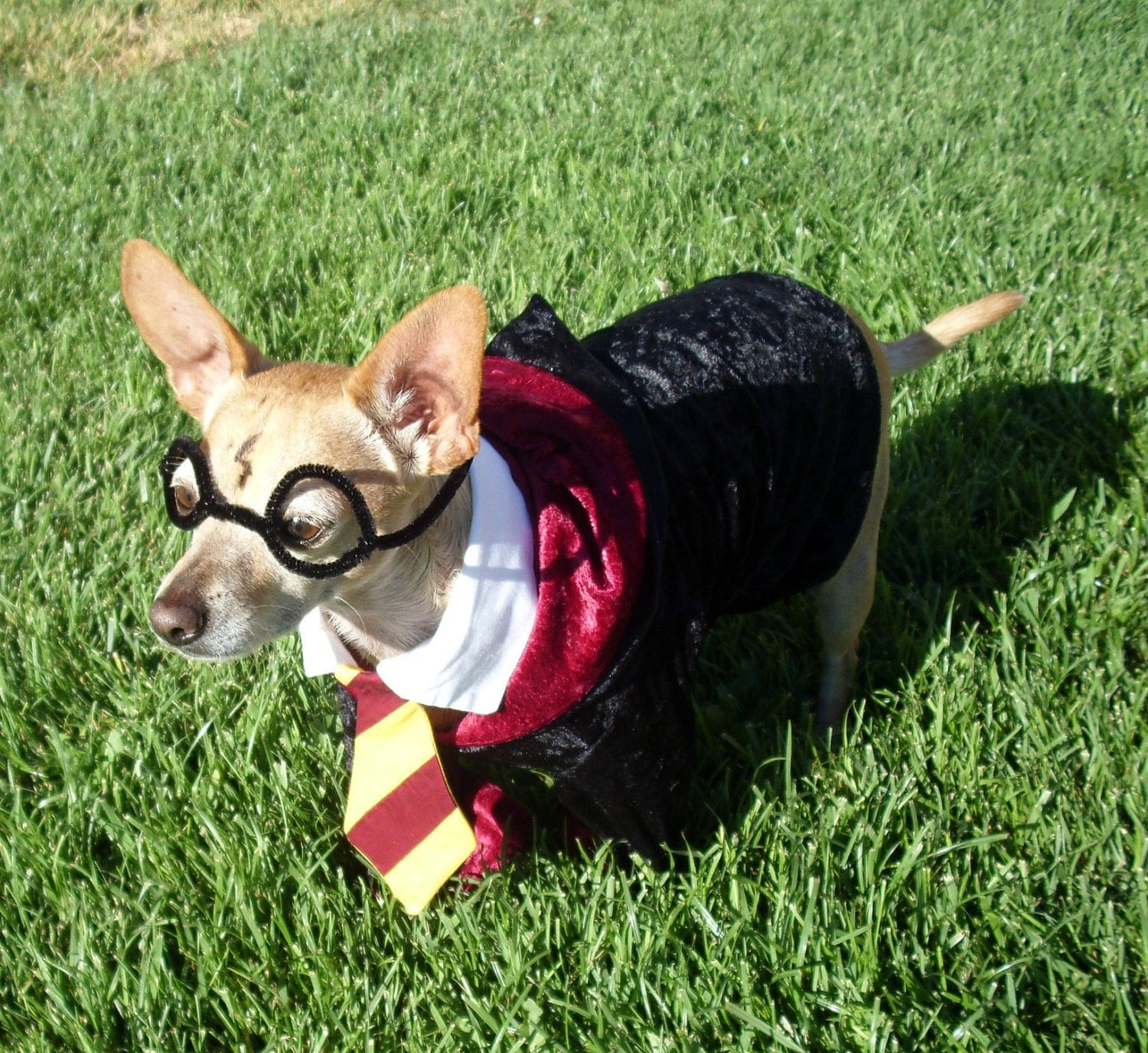 Halloween Preview: Cutest Dog Costumes