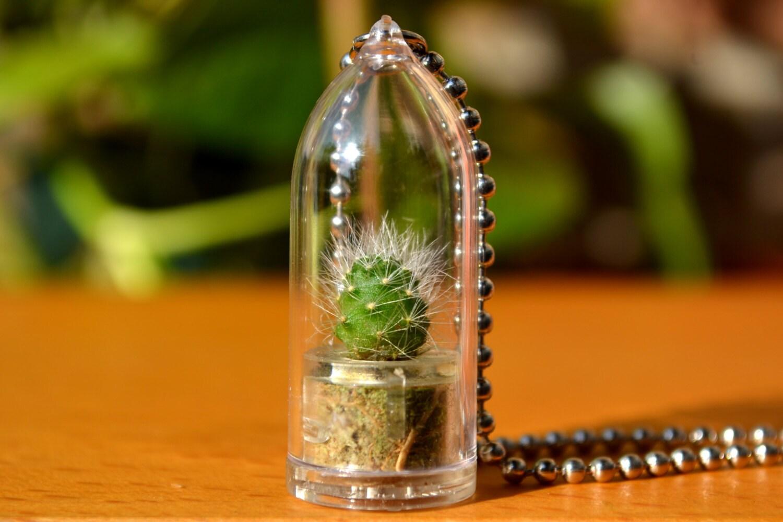 Snow White Cactus Plant - Wear It Mini Plants Etsy Shop