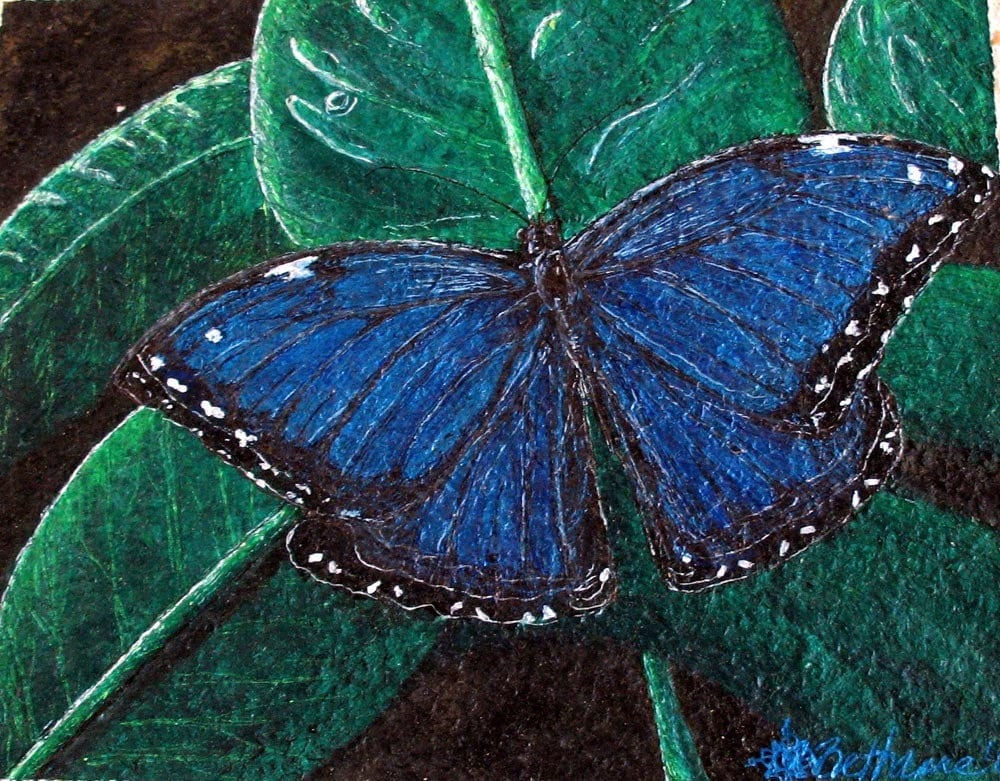 Famous butterfly paintings - photo#23