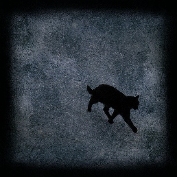 Walking Away - Fine art photograph, 8x8 print, black cat
