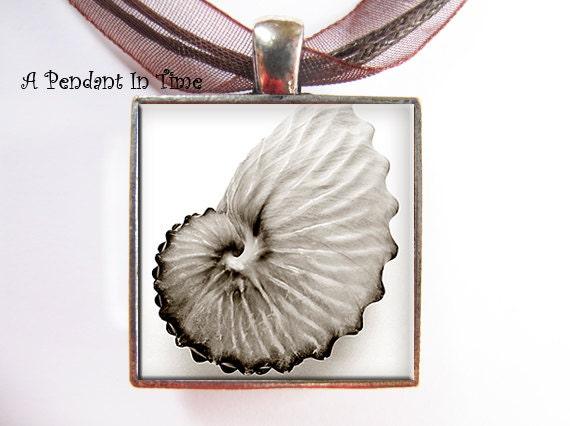 Christmas Sale Nautilus Seashell Pendant - APendantInTime