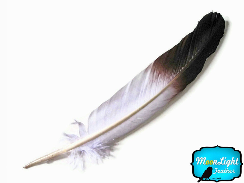 Eagle Feather Drawing Eagle feathers  6 piecesEagle Feather Pencil Drawing