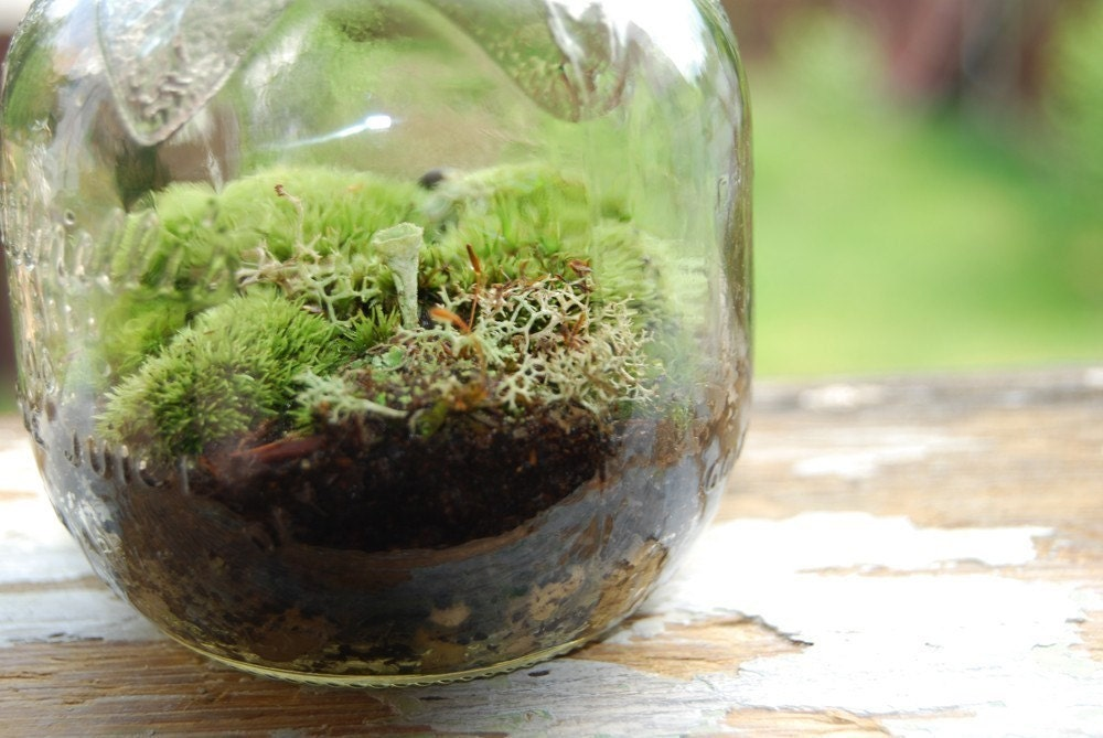 Apple Terrarium No.104