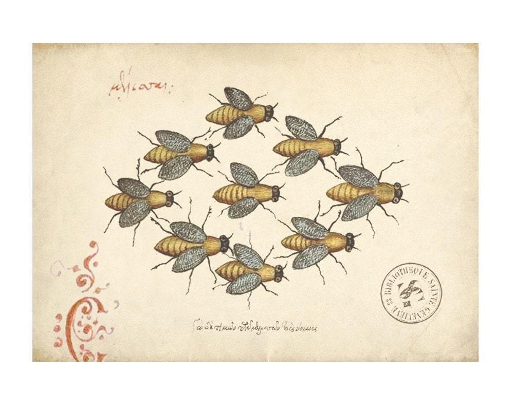 Vintage Bee Print