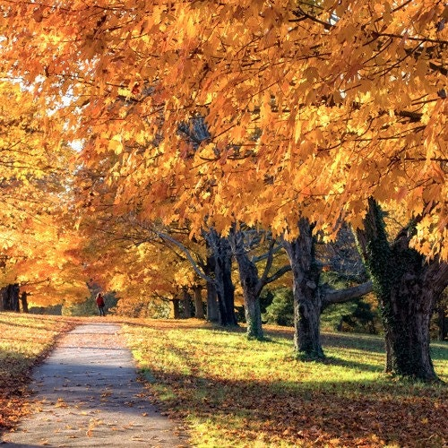 Walk into Autumn - 8x8 - Fine Art Photograph - BOGO SALE