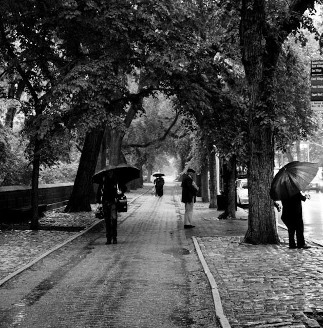 IN STOCK Rainy Day in Central Park - NYC 12x12 Photograph on Canvas