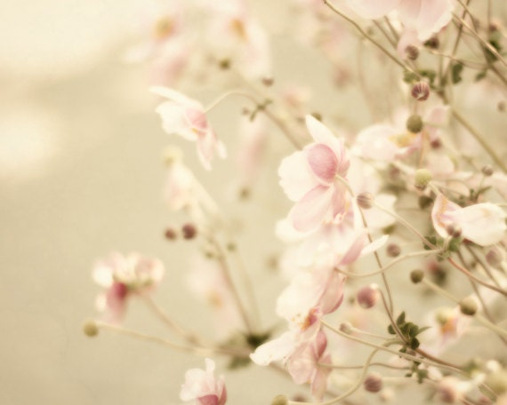 Pink flower photography shabby chic wall decor by purenaturephotos - Wall decor photography ...