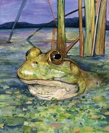 Fine Art Print Frog in a Bog