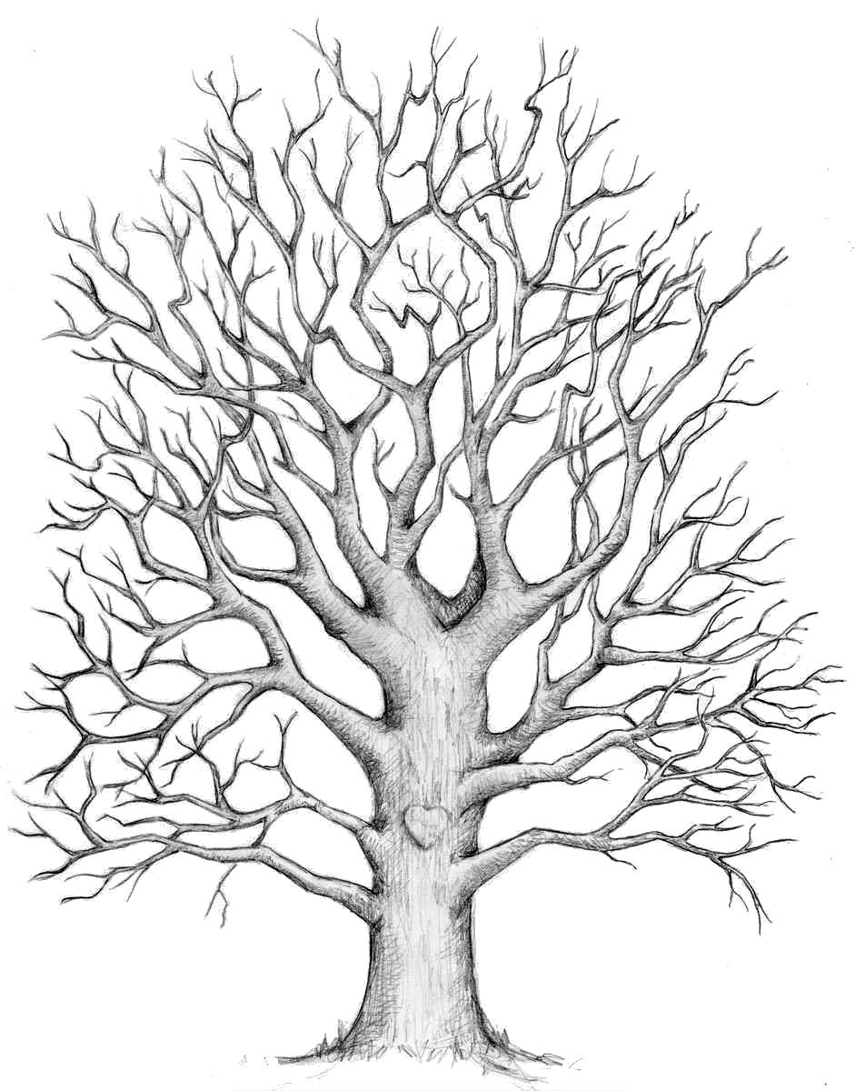Line Art Of Tree : Line drawing oak tree imgkid the image kid has it
