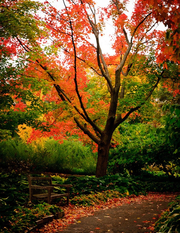 Fall Leaves Wall Art - Autumn Color Photo - Landscape Fine Art Photography - PhotographySource