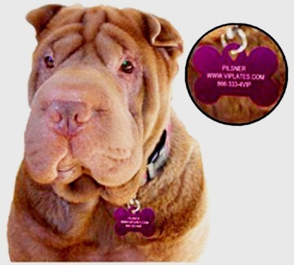 PET ID PERSONALIZED ON TWO-SIDED LARGE BONE TAG IN 10 COLORS