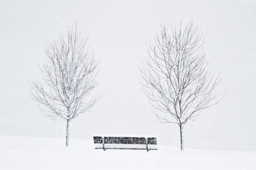 Bench and Trees in Blizzard 8x12''