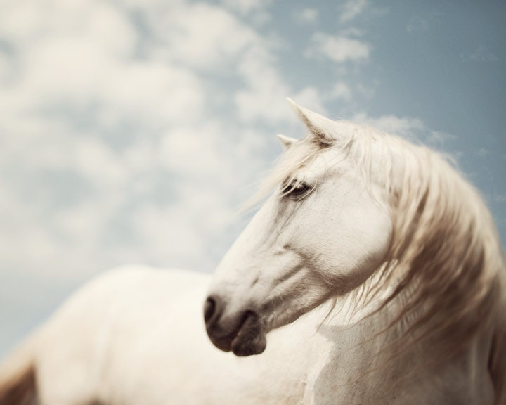 Wild is the Wind - Fine art animal photograph - White horse in muted neutrals