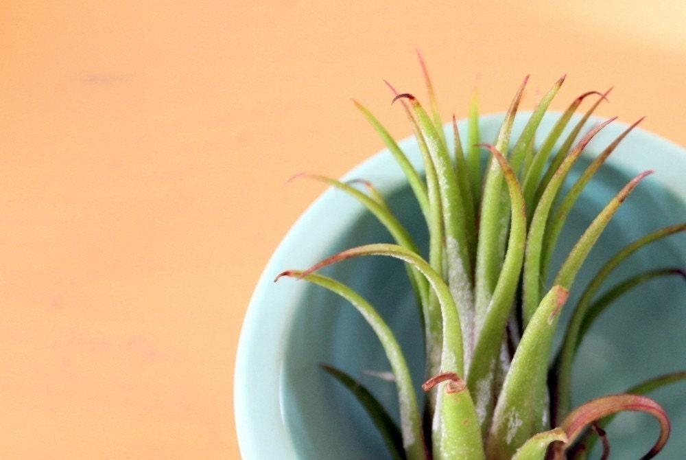 pflegeleichte Pflanzen für den Wohnraum