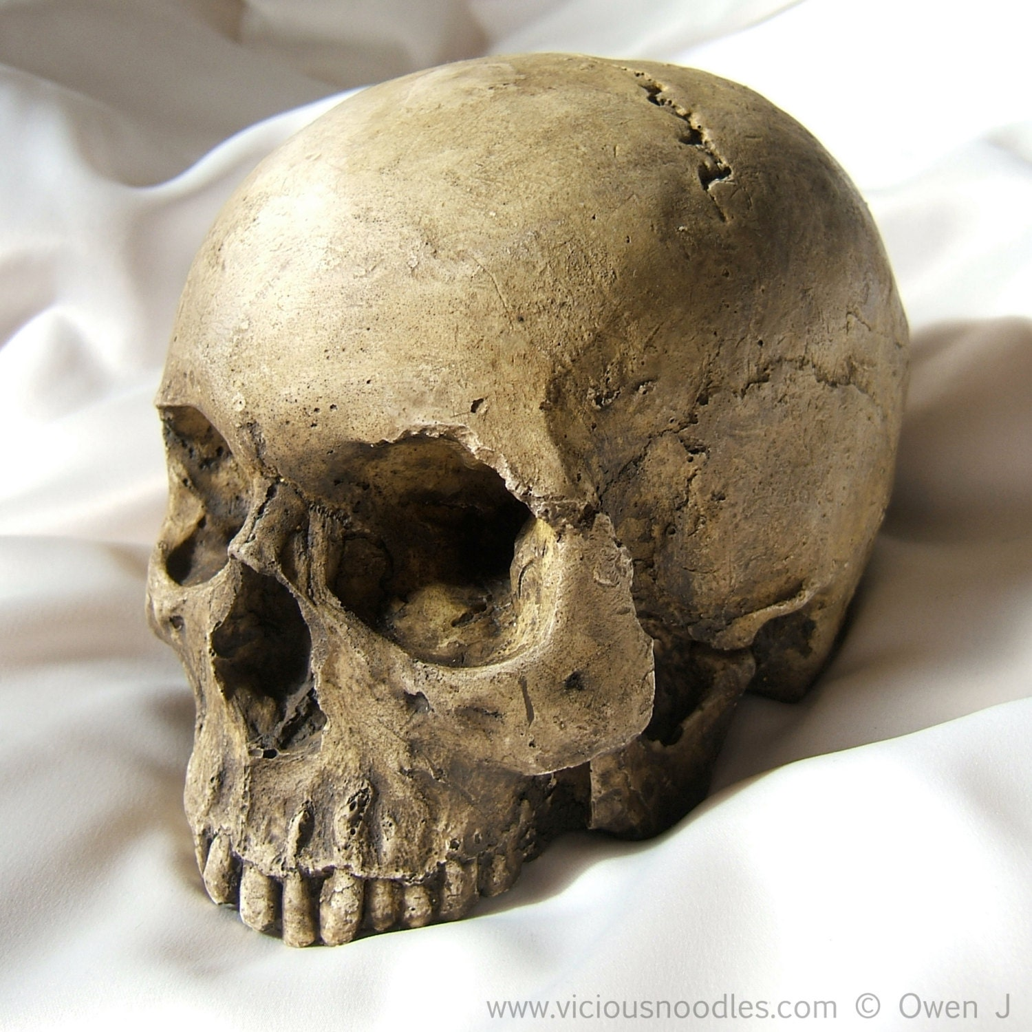 HUMAN SKULL REPLICA full size realistic replica made from plaster of Paris and painted for an aged, weathered effect - viciousnoodles