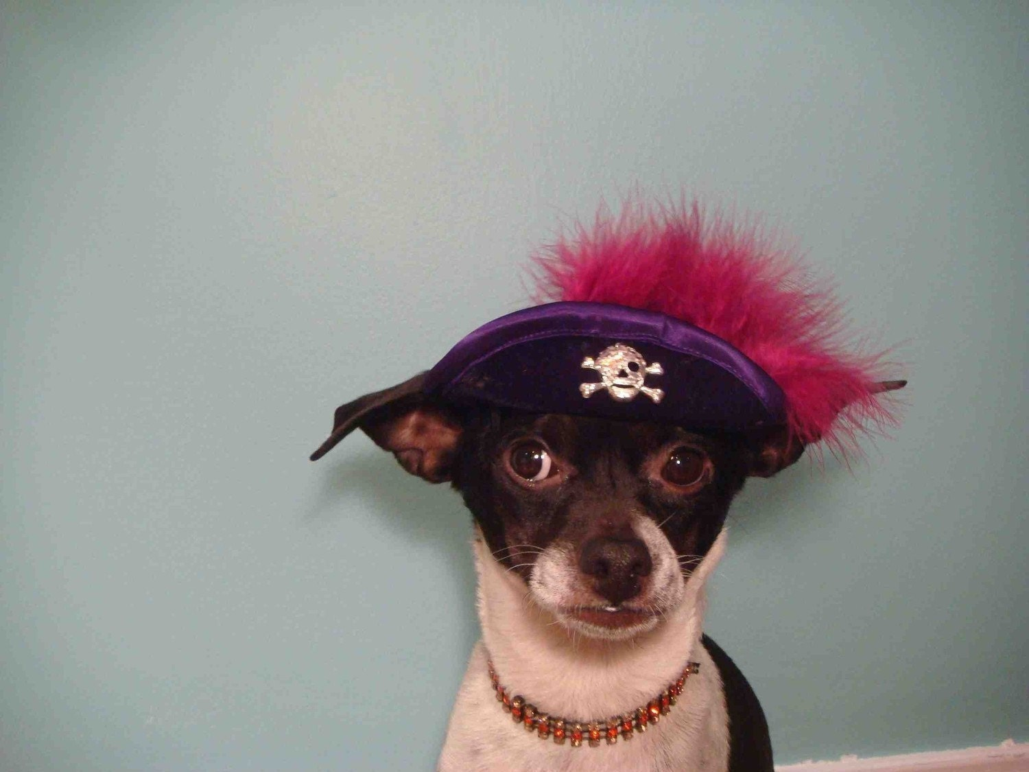 Dog pirate hat
