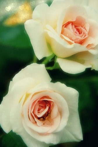 Roses are Pink - 8x10 Fine Art Print