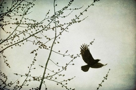 Blackbird, Fly - Original Fine Art Photograph