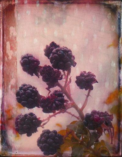 Blackberries and Polka Dots   A Signed Fine Art Photograph