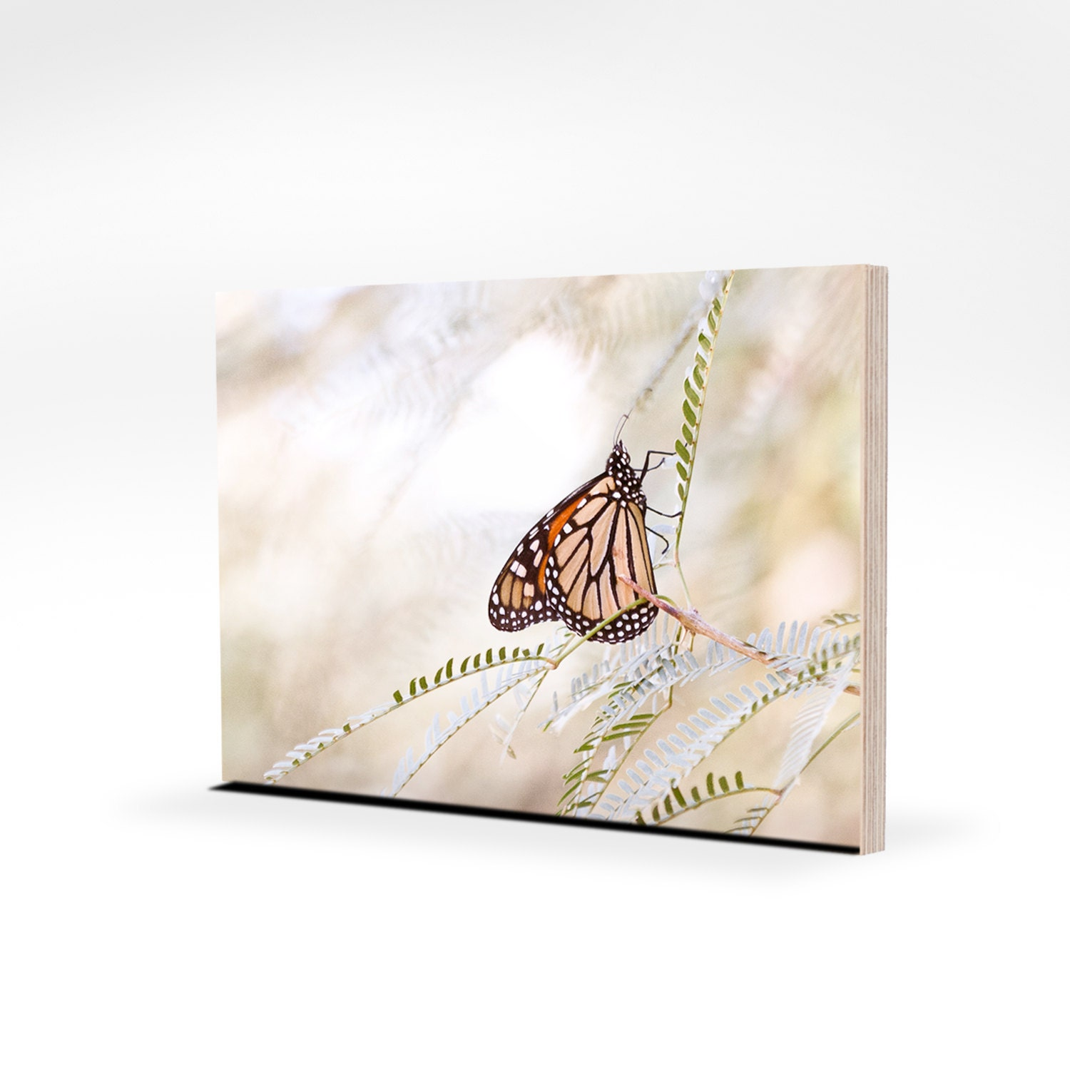wall art ready-to-hang 5x7 butterfly woodland photo panel eco friendly maple plywerk FREE SHIPPING, no framing required
