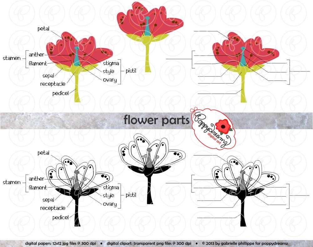Flower Parts Science Diagram Clipart Set 300 Dpi By