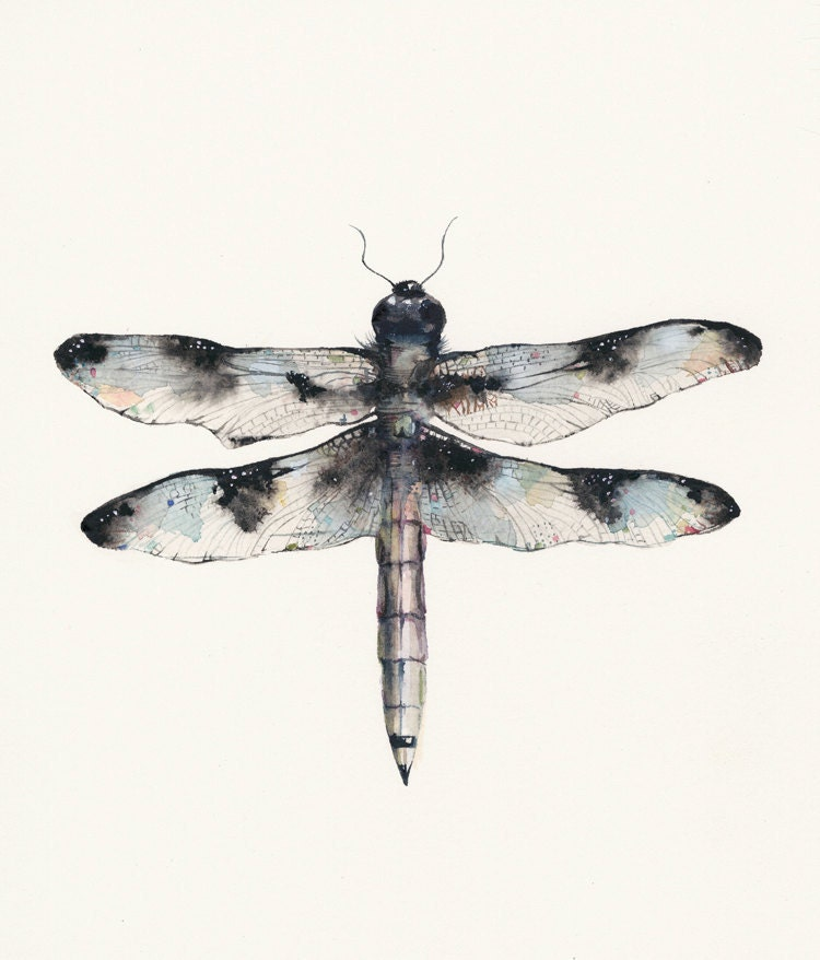 Male Common Whitetail Dragonfly Archival Print by Amber Alexander