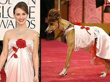 Натали атласное платье собак Harness
