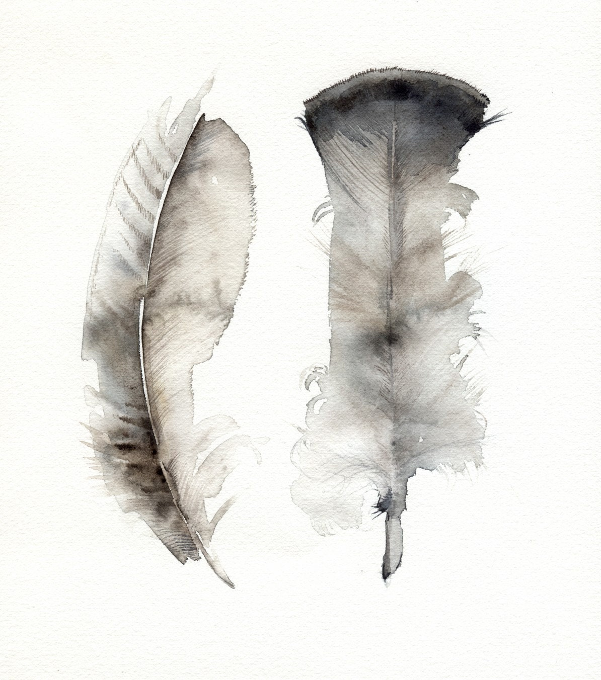 Watercolor Feather Turkey Feathers archiv...