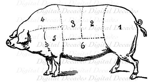 Diagram Of Beef Cuts Meat in addition Pork Meat Illustration in addition 164395 also 13 moreover Meat cuts. on meat cuts chart print