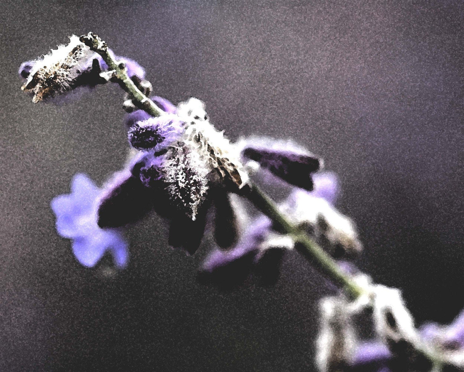 Muted purple flower photograph - 8x10 print