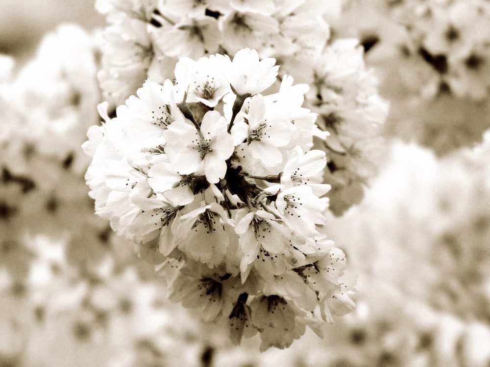 Handmade Wedding Decor Bridal Art Photograph Flowers Rustic Black White