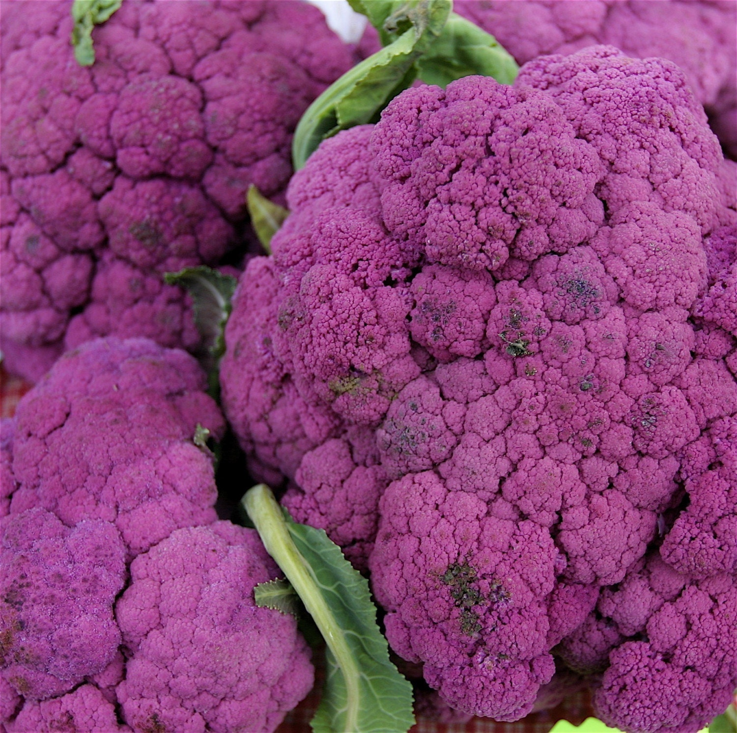 Organic Heirloom Purple of Sicily Cauliflower Garden Vegetable Seed