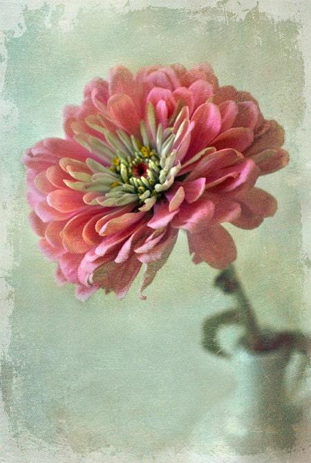 Далия в розовый мелкий поздравительная открытка искусства