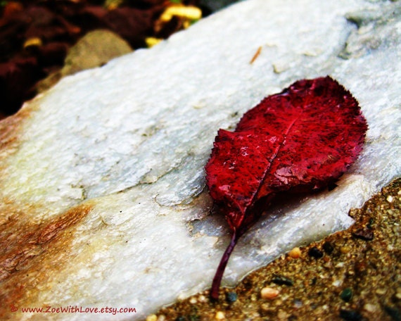 Autumn Leaf Photograph - Red Fall Photo - Change Apoptosis Beauty - Unique Fine Art Photography 8x10 After The Rain - ZoeWithLove