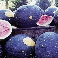 Watermelon The Moon and the Stars Organic Heirloom Seeds - Garden Seed Melon