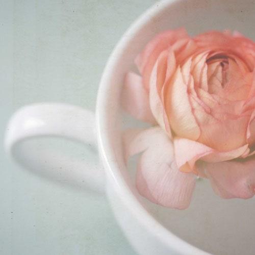 Пусть это всего лишь уплыть.  розы.  белого цвета слоновой кости.  чашка чая.  кофе.  европейский.  потертый шик.  Boho шик.  5x5 Fine Print художественной фотографии