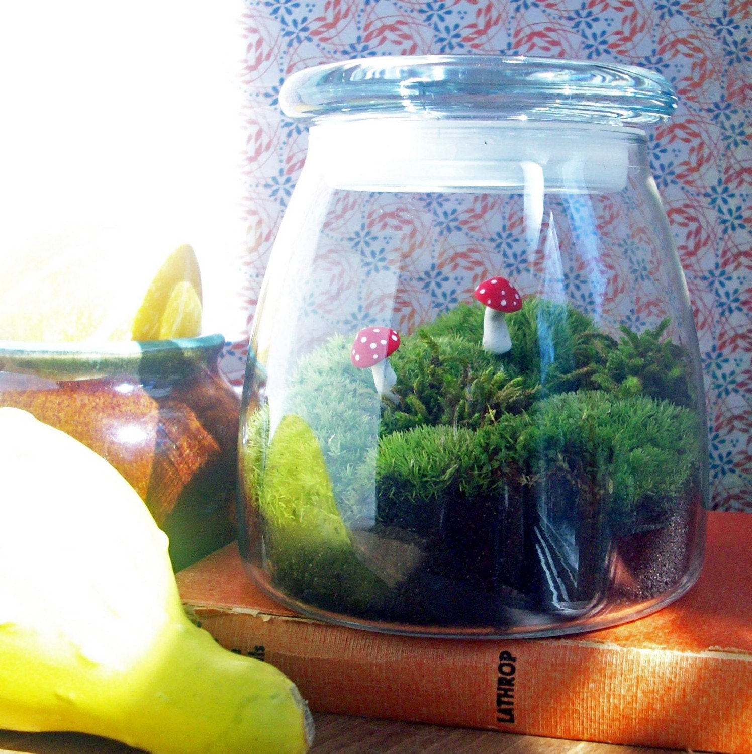 Good Morning America Special - Terrarium with Free Shipping