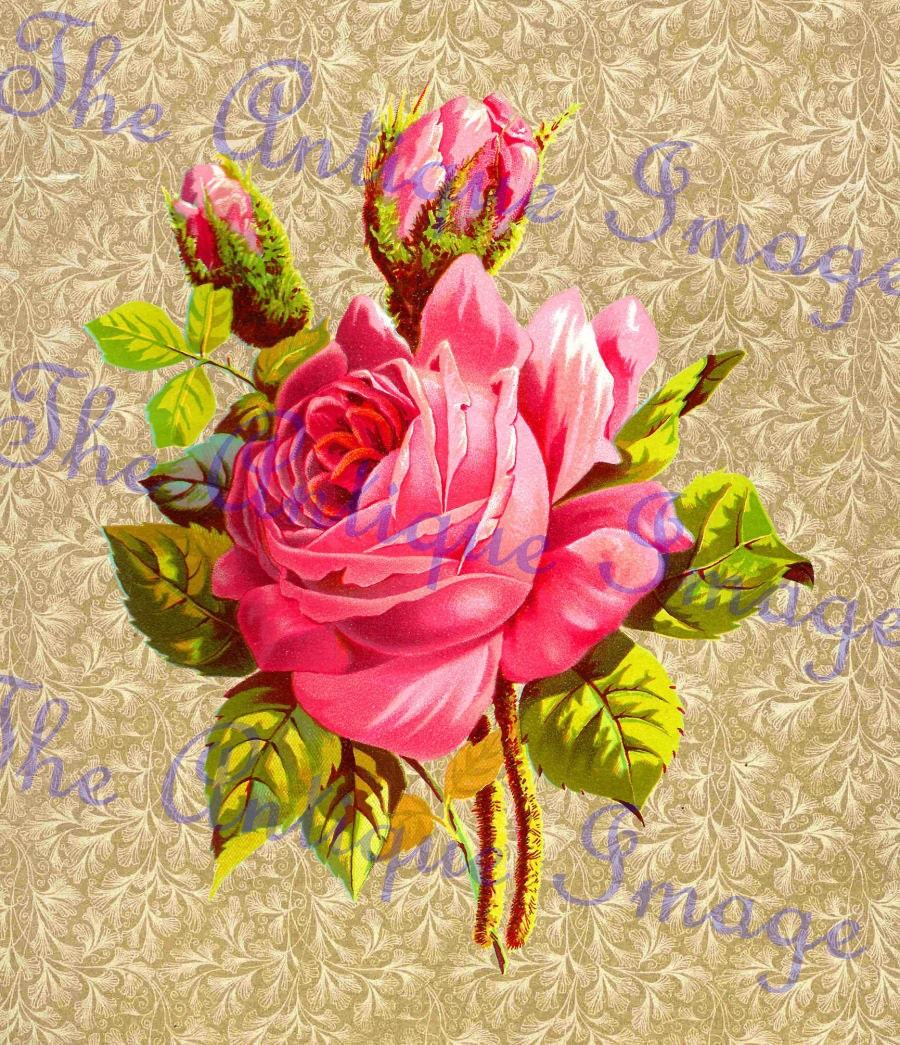 rose flowers digital design - photo #11