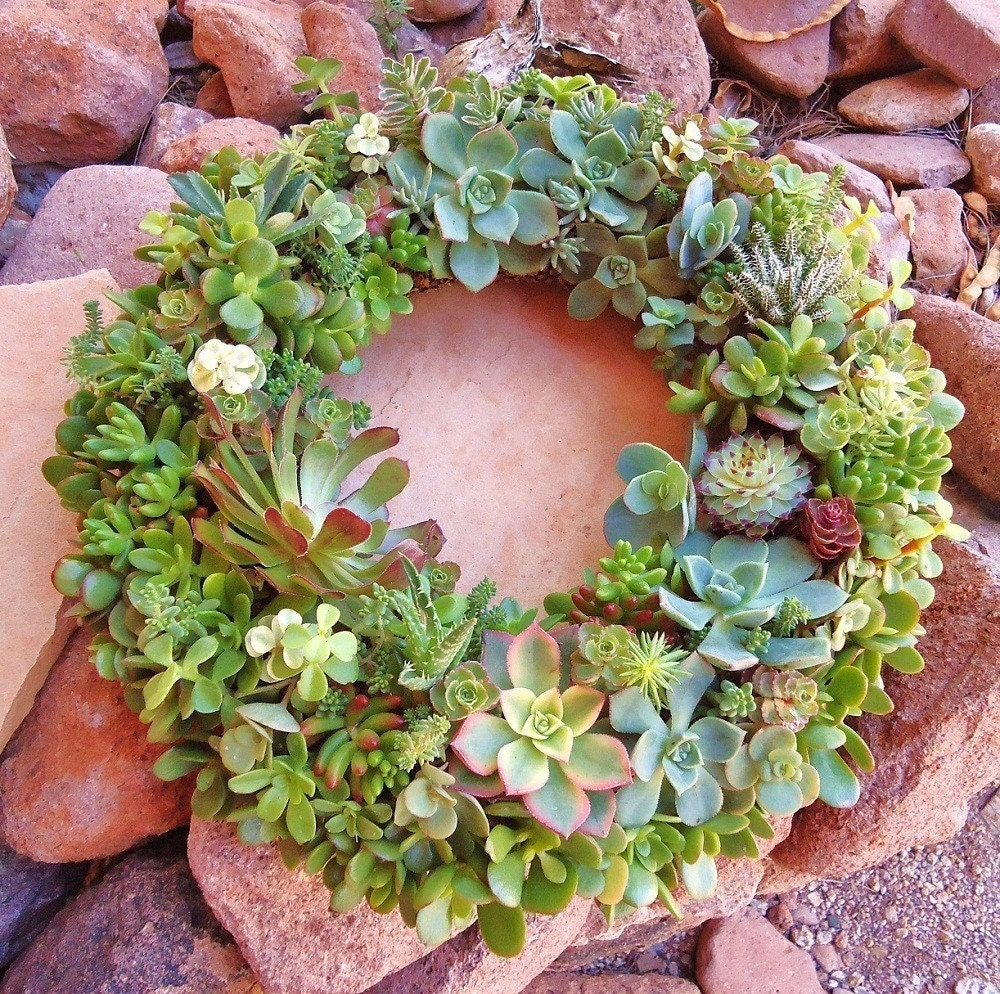 As Seen in Birds & Blooms and Phoenix Magazines, The Original Succulent Designs Living Succulent Centerpiece/Wreath XL