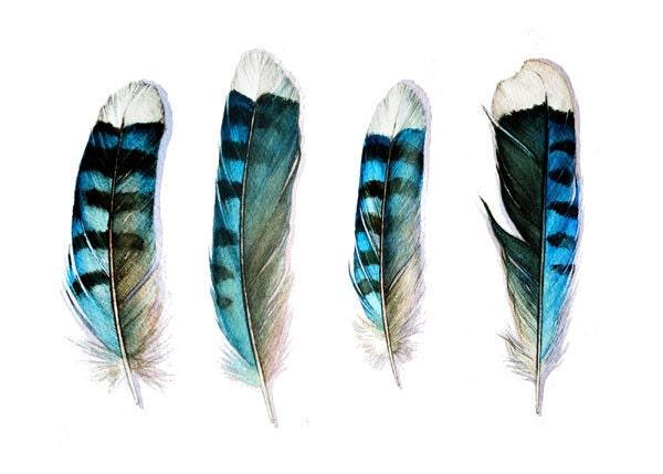 Four Blue Jay Feathers Art Card - jodyvanB