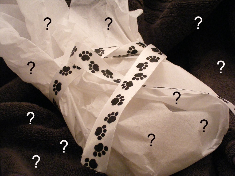 Mystery Grab Bag for Pets and their Humans