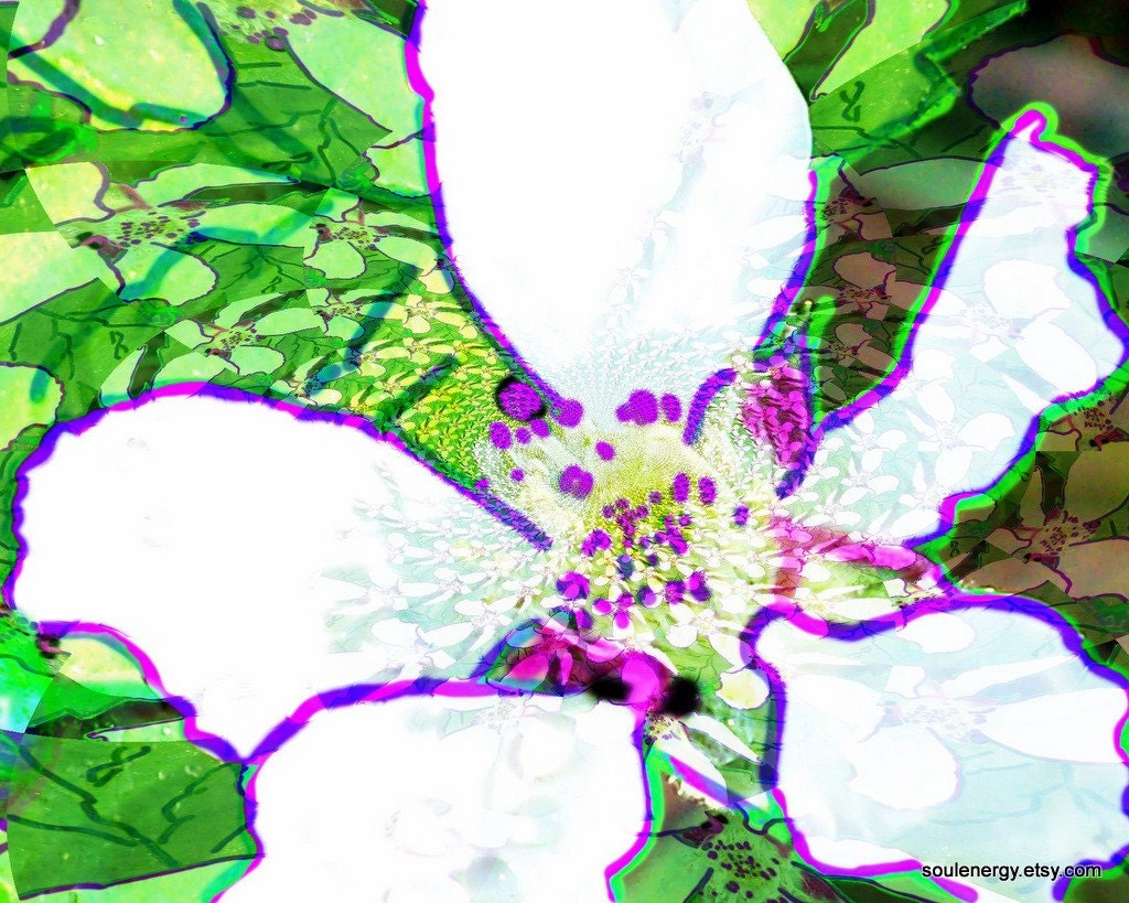 White Flower 16x20 Digital Pop Art Photograph