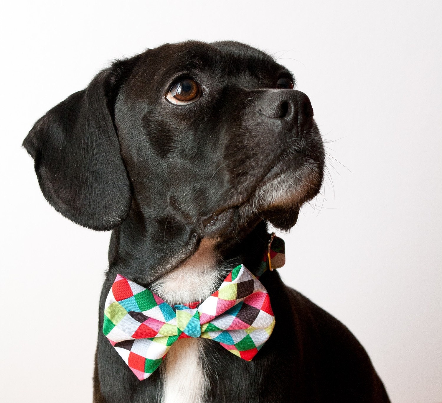 Colorful Cubes Dog Bow Tie Collar