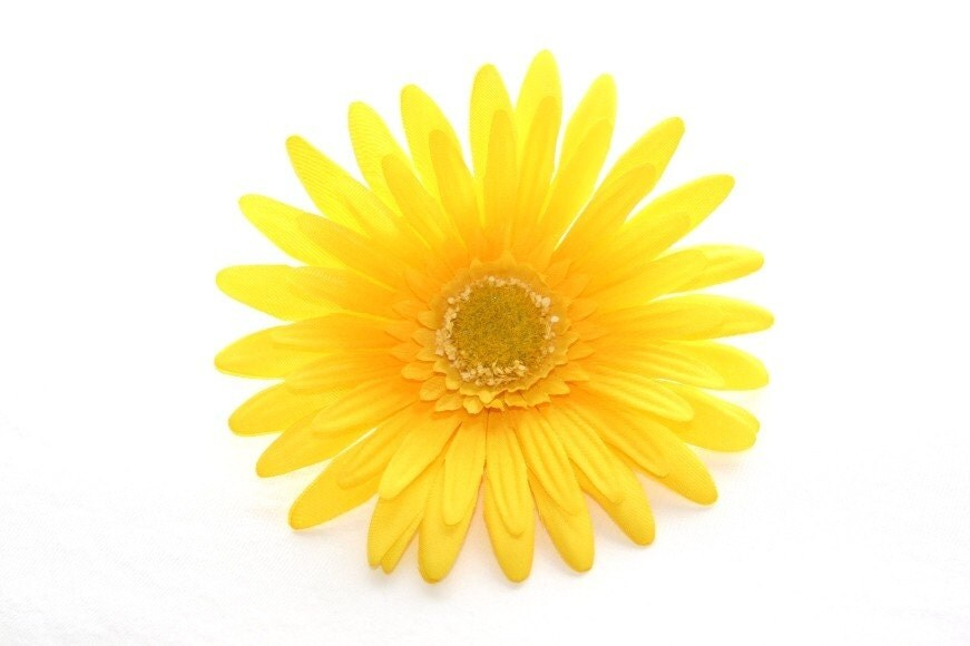 AWESOME bright Yellow Gerber Daisy 4.5 Inches of by ...