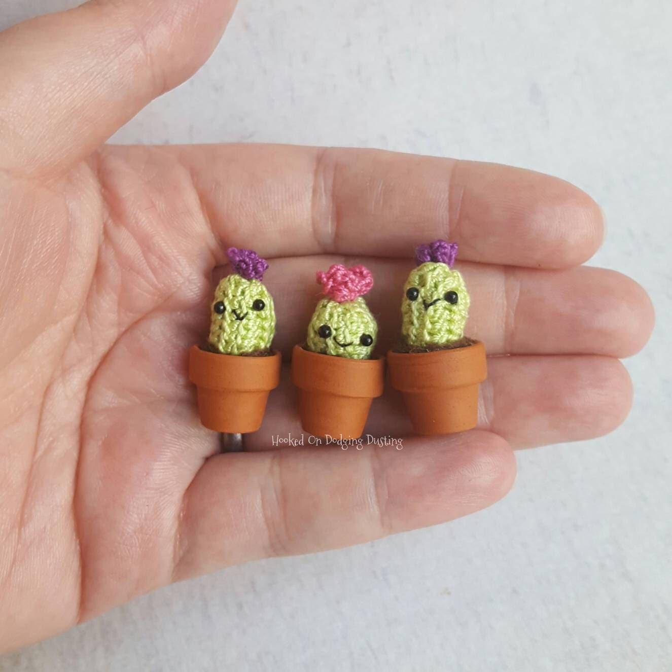 Miniature mini cactus succulent cacti flower plant garden gardener plant pot tiny.