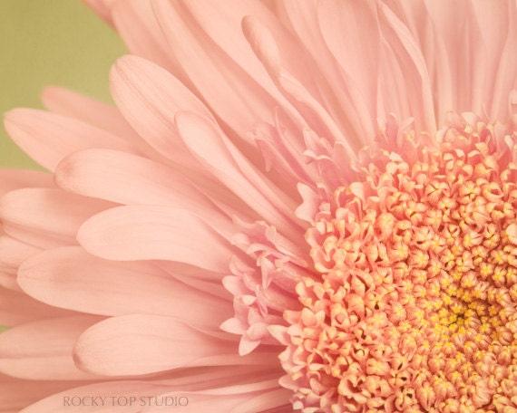 Spring Flower Photography Print, Pastel Pink Flower, Girls Room Decor, Pale Pink & Yellow, Floral Wall Decor, Modern Wall Art, 8x10 Print - RockyTopPrintShop